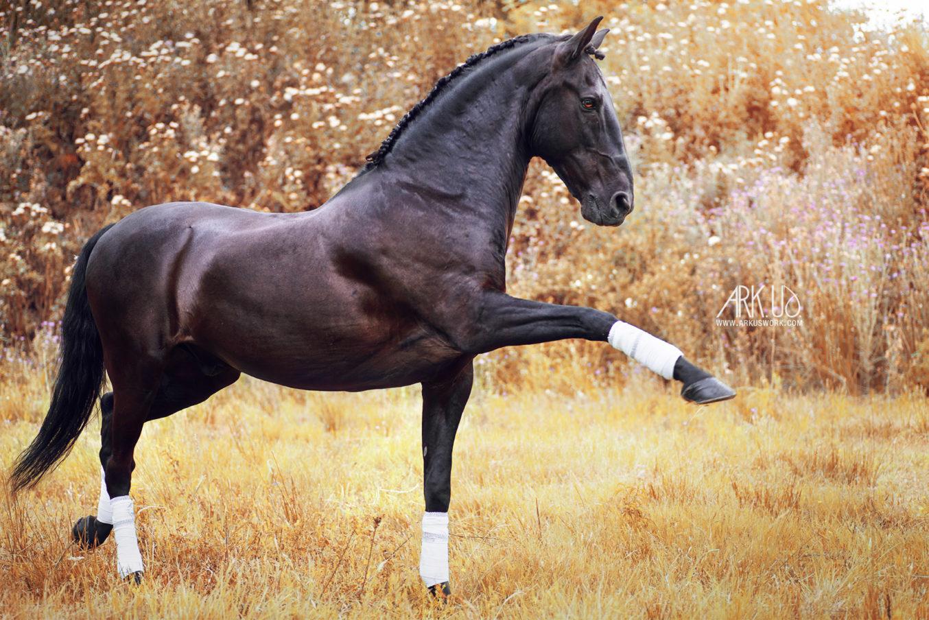 Koniak